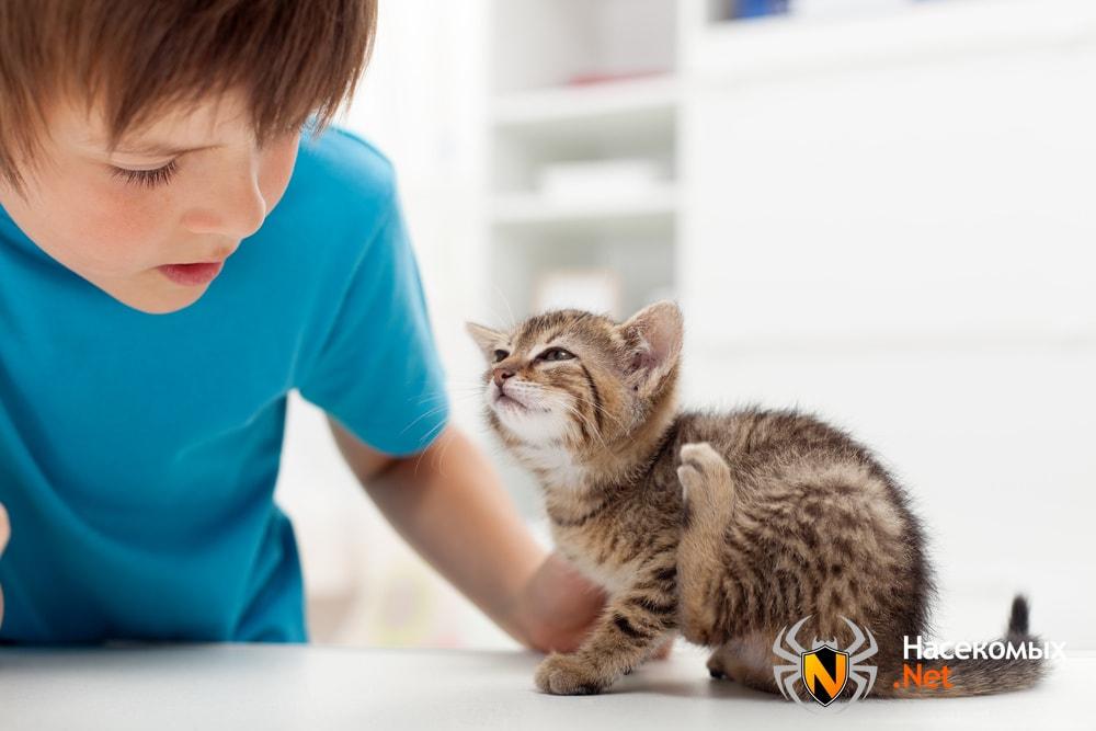 Блохи у котят как вылечить