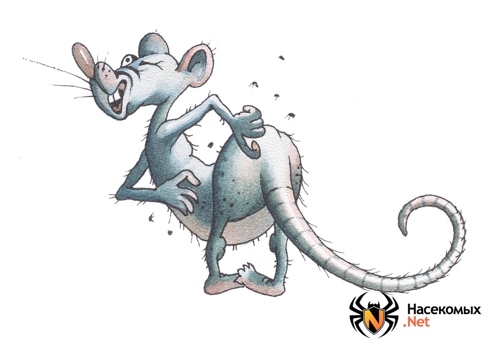 Блохи у крыс