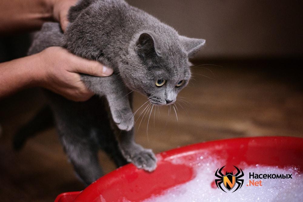 Купание кота от блох
