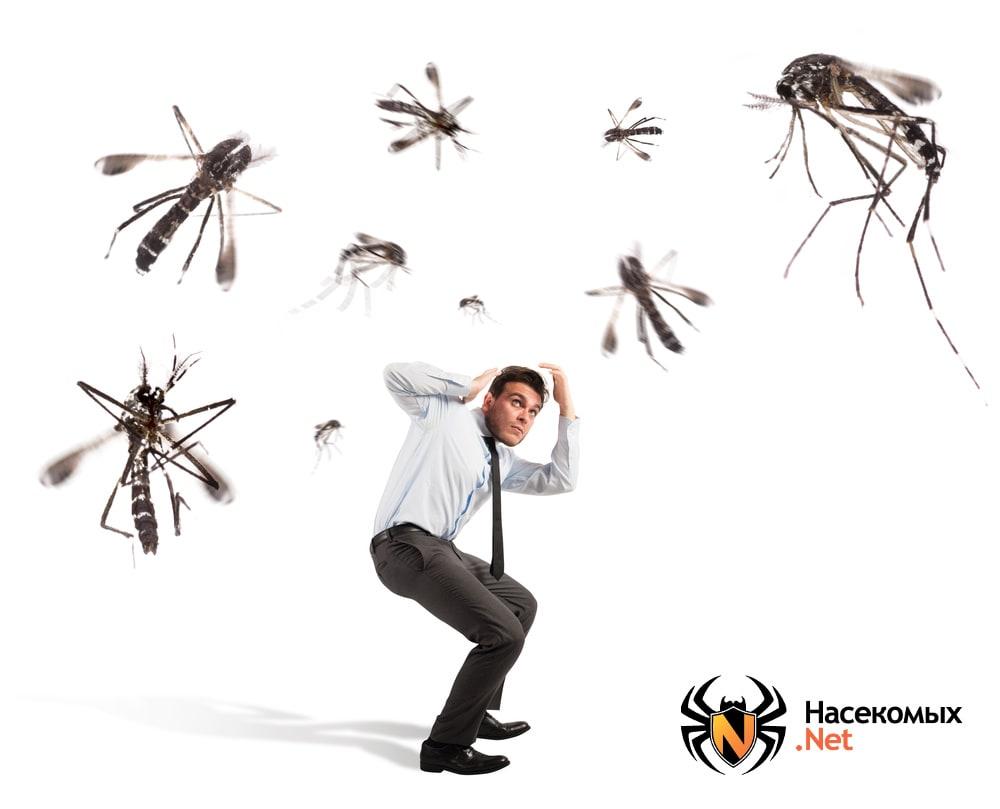Как обезвредить домашних комаров