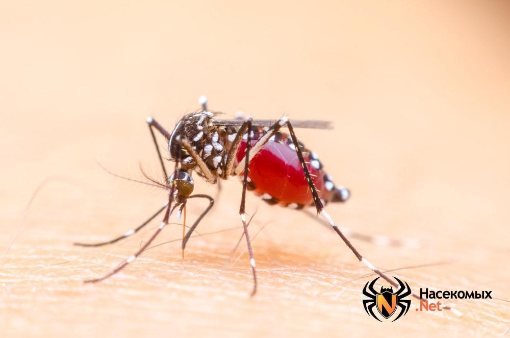 Комар как носитель инфекции