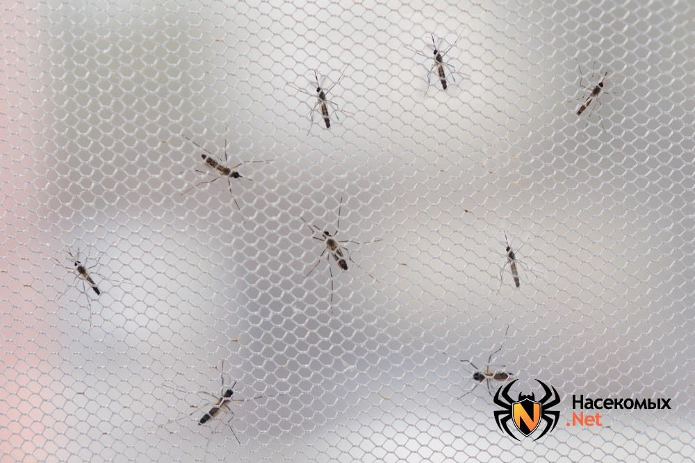 Комары на москитной сетке
