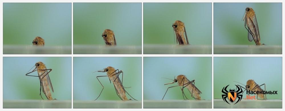 Жизненный цикл комаров фото