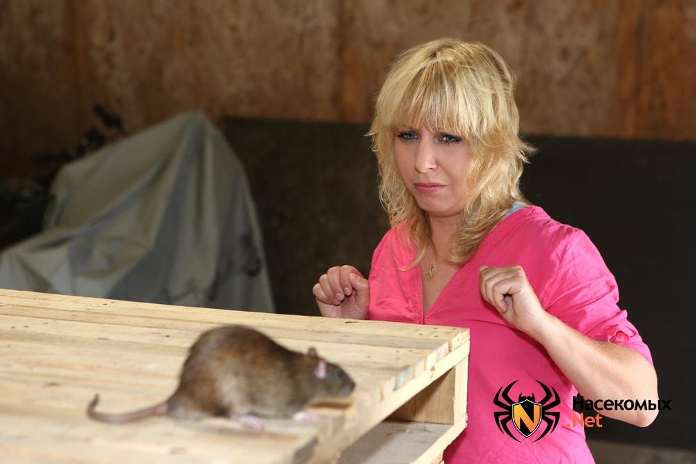 Крыса и опасна для человека