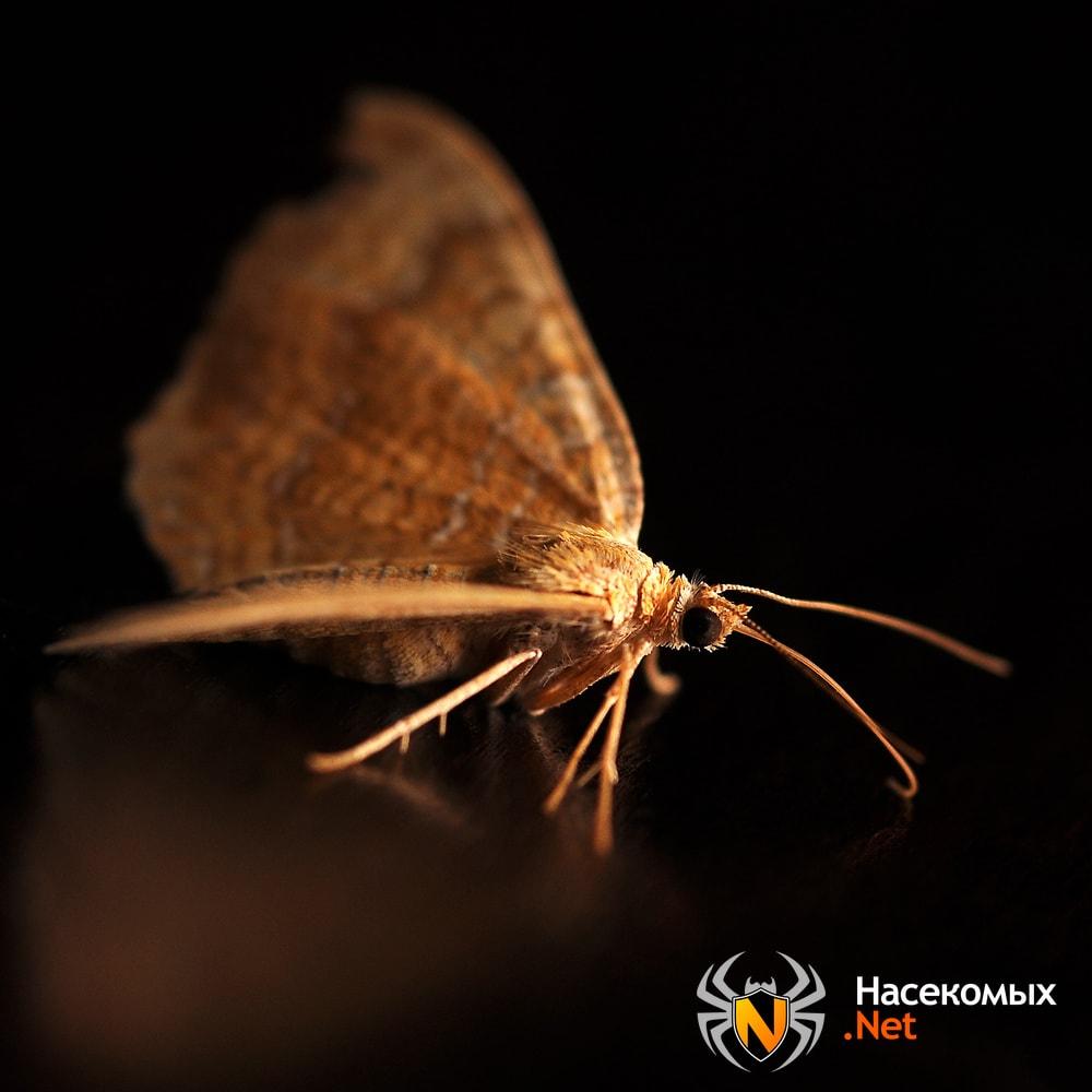 Как отличить моль от бабочки