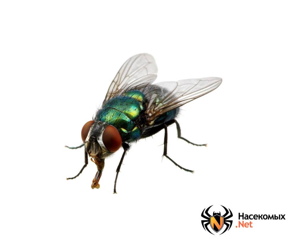 Чем травить мух