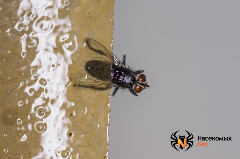 Как бороться с мухами фото