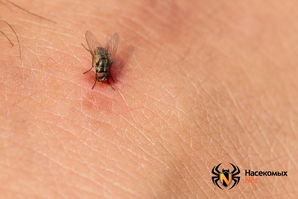 Как избавиться от мух фото