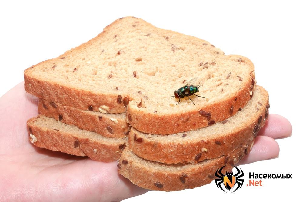 Муха приземлилась на хлеб