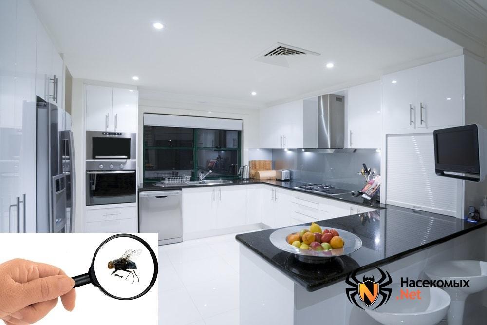 Мухи в квартире и на кухне