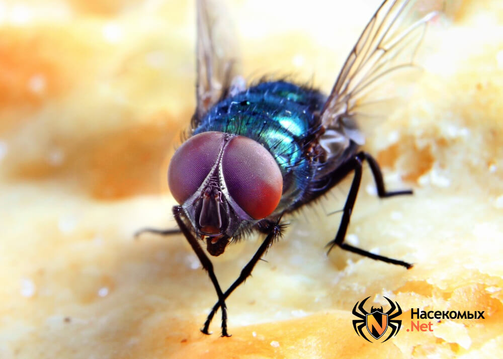 Выведение мух
