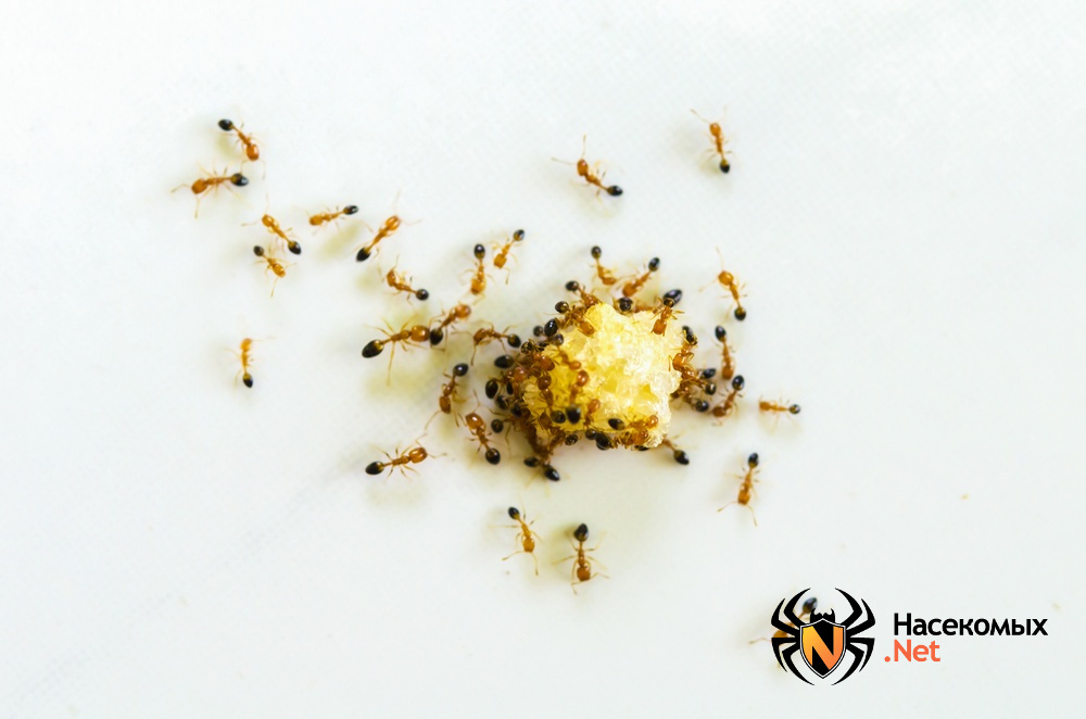 Как избавиться от муравьев