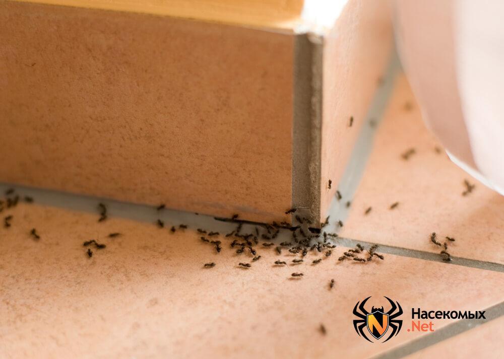Как вывести муравьев фото