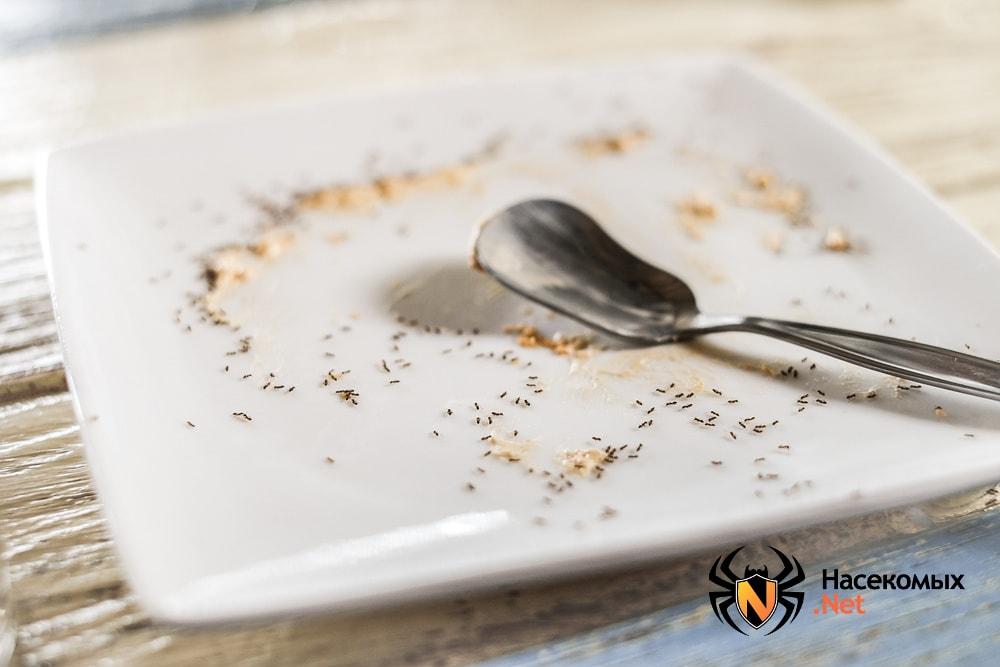 Мелкие муравьи в тарелке