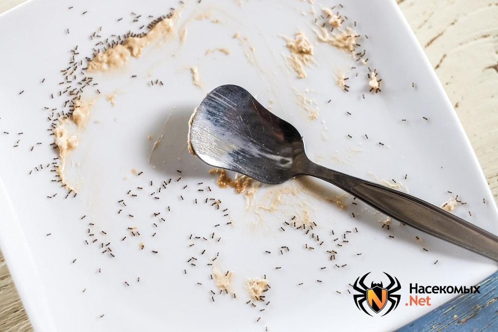 Муравьи в тарелке