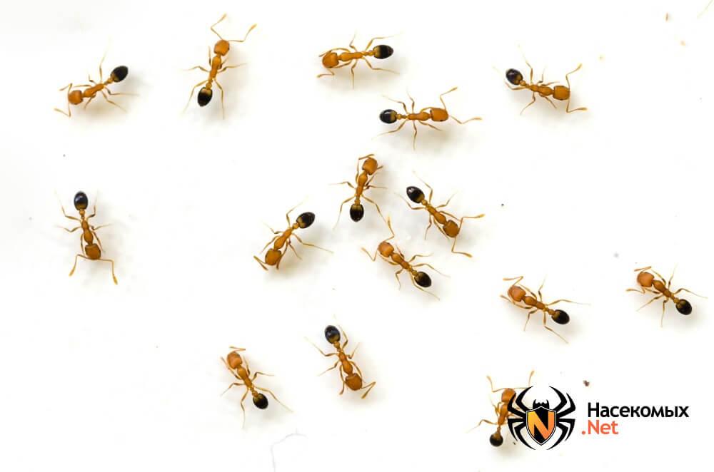 Народные методы борьбы с муравьям