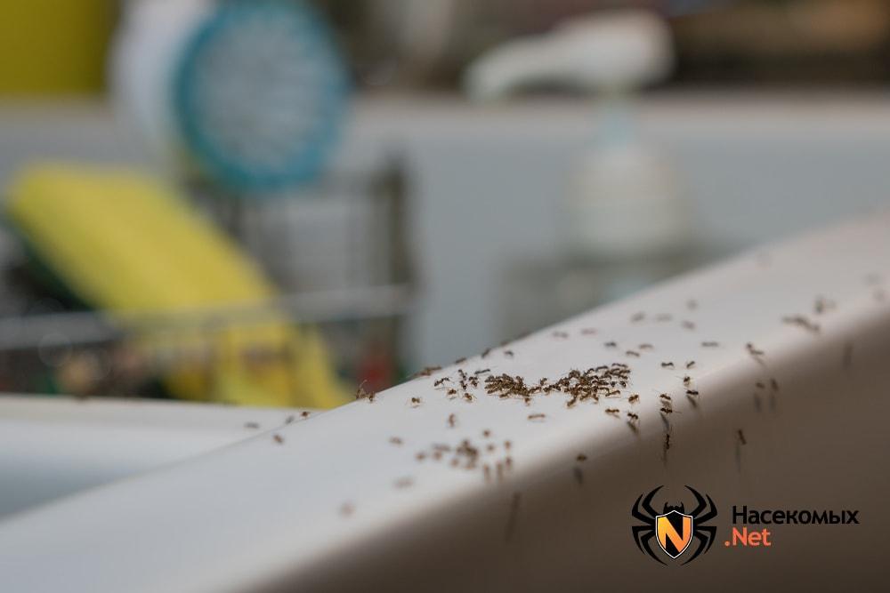 Передвижение муравьев по квартире