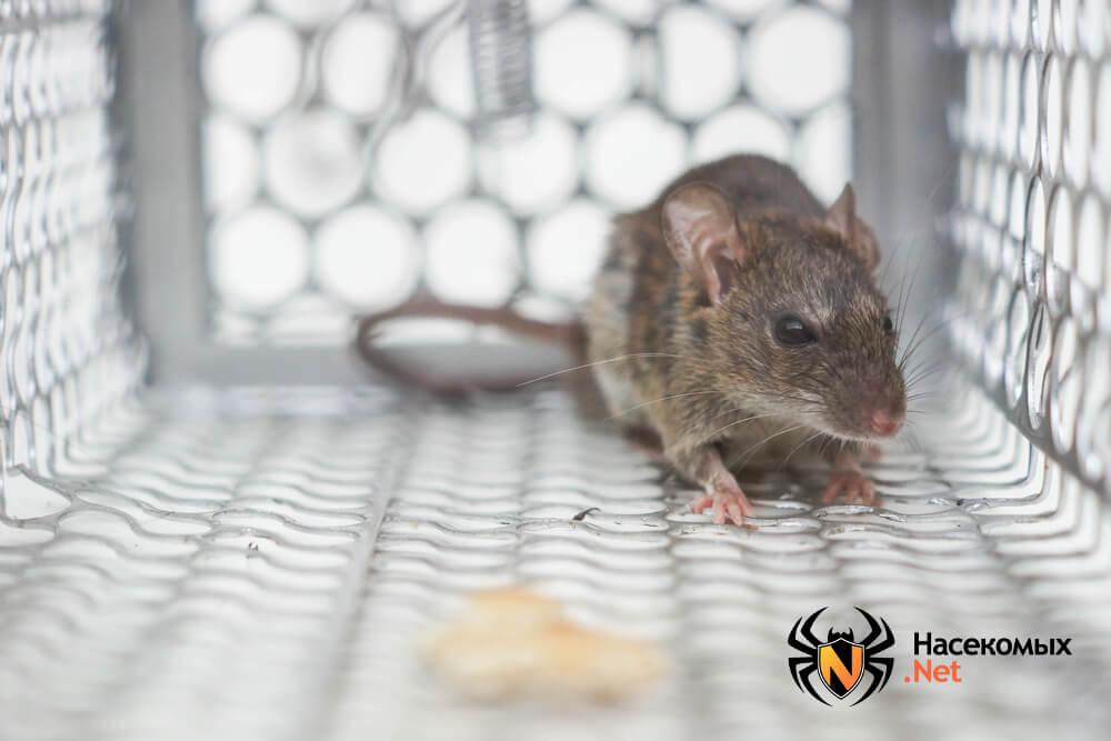 Как избавиться от мышей фото