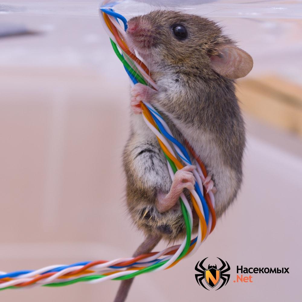 Мышь на потолке