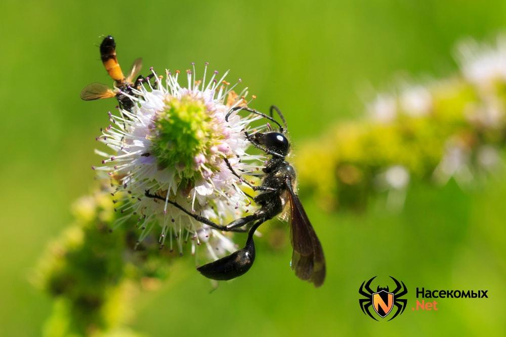 Фото дикой осы