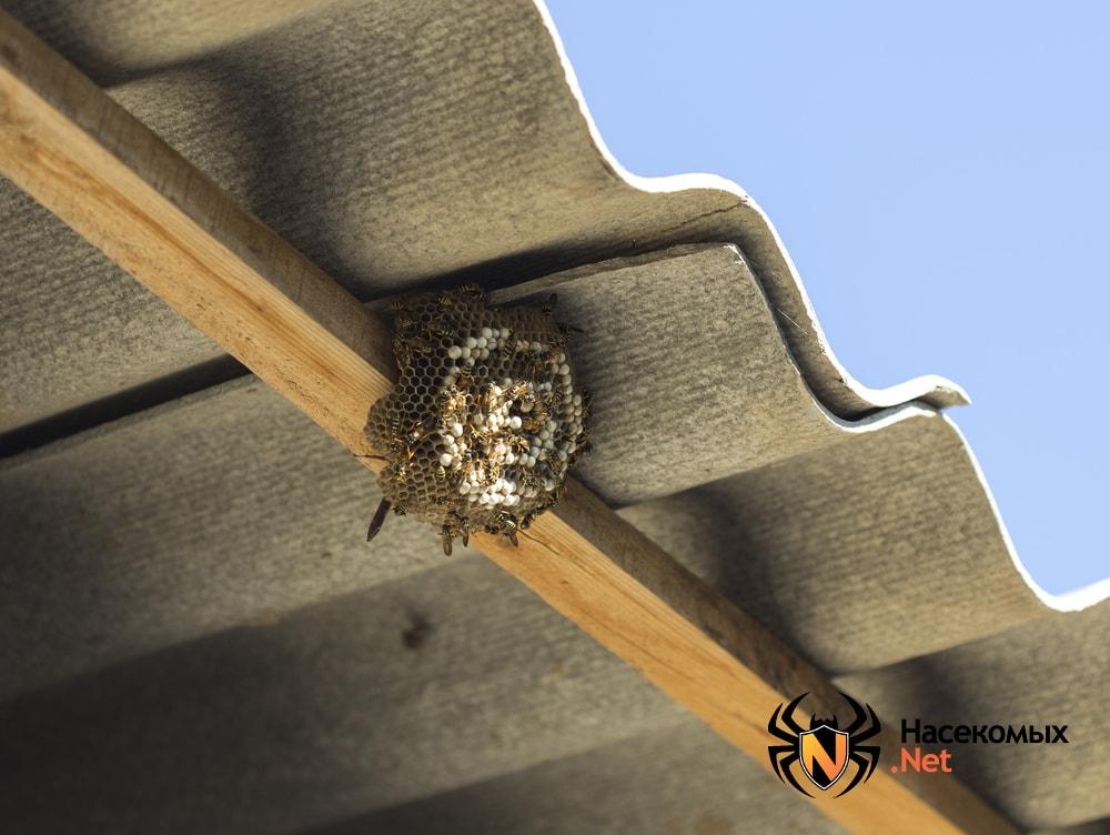 Гнездо ос в доме