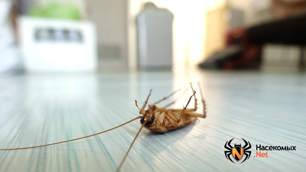 Борьба с тараканами фото