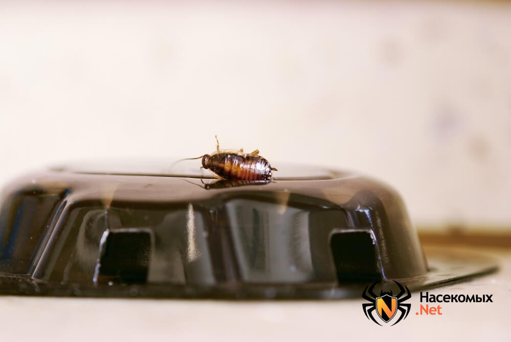 Как избавиться от тараканов фото