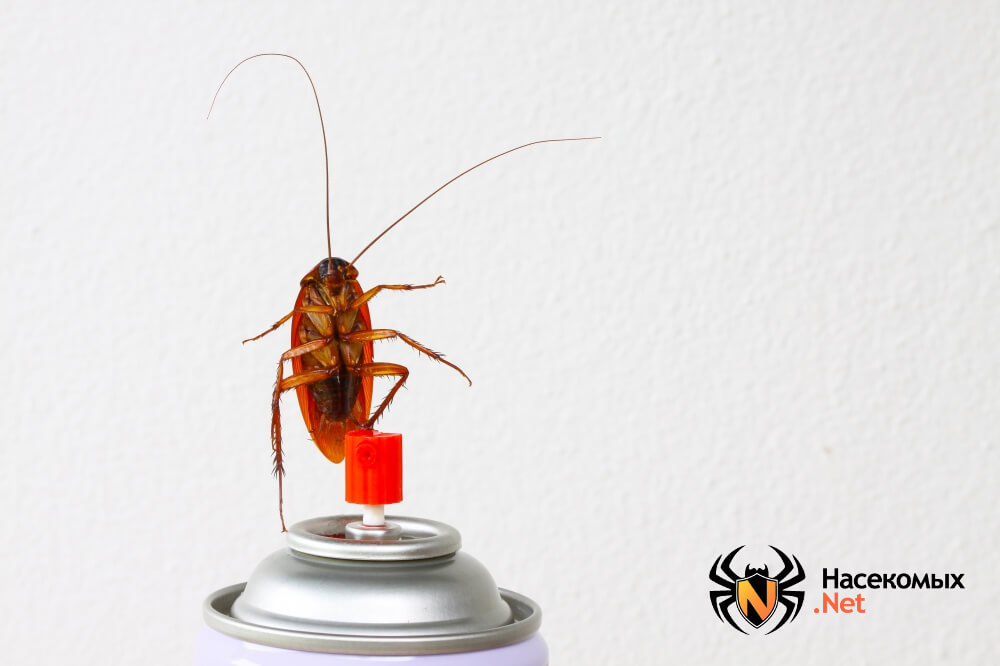 Как вывести тараканов фото