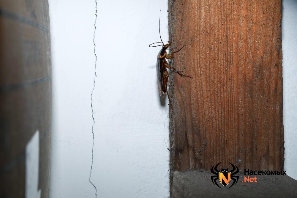 Народные методы борьбы с тараканами фото