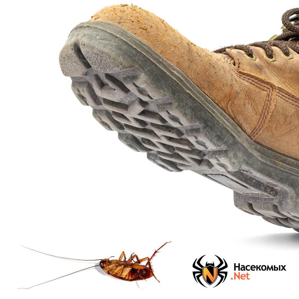 Народные методы борьбы с тараканами