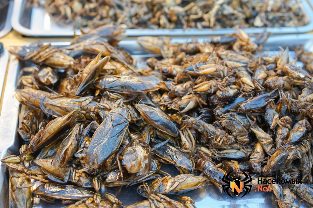 Тараканы могут быть пищей
