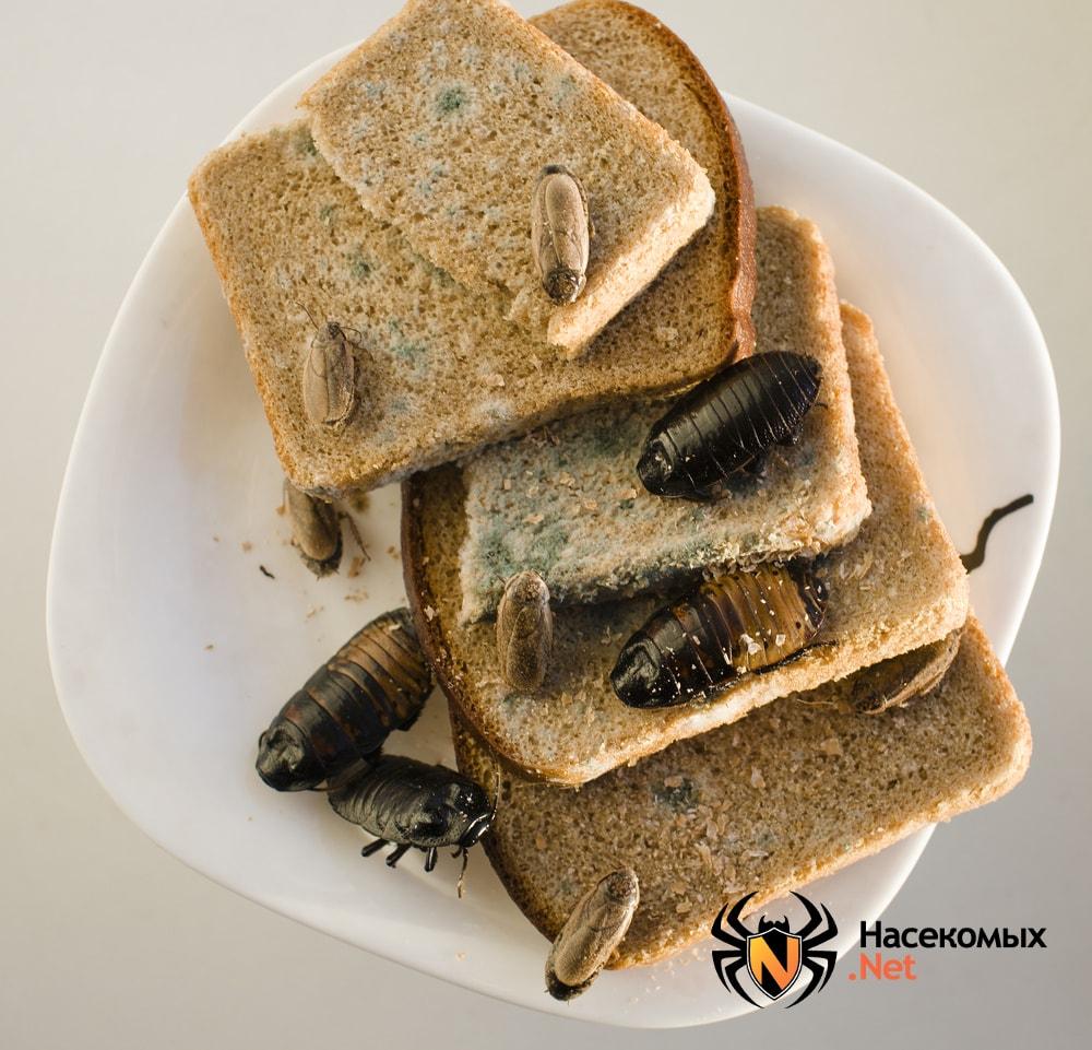 Тараканы на хлебе