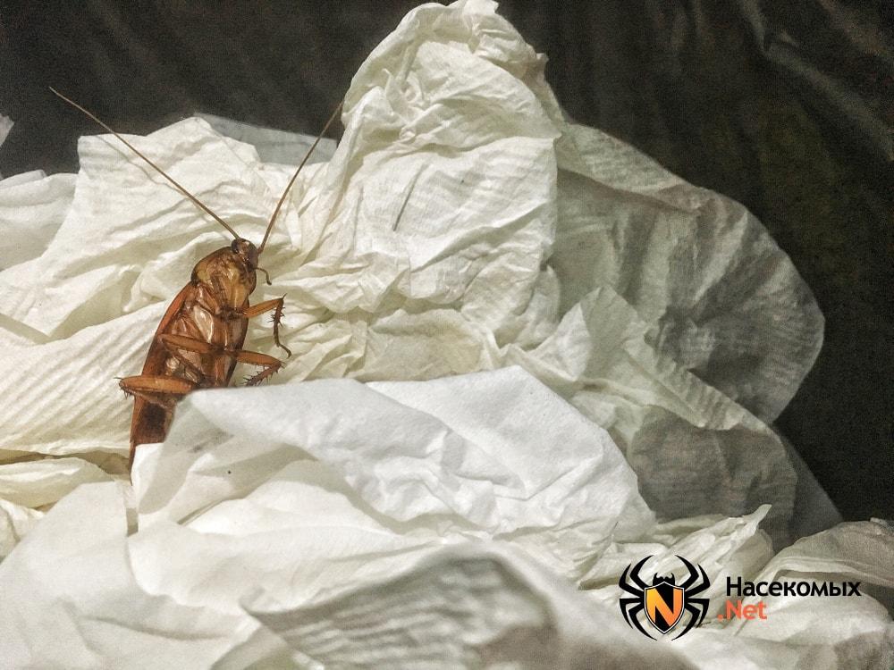 Тараканы в мусорном ведре