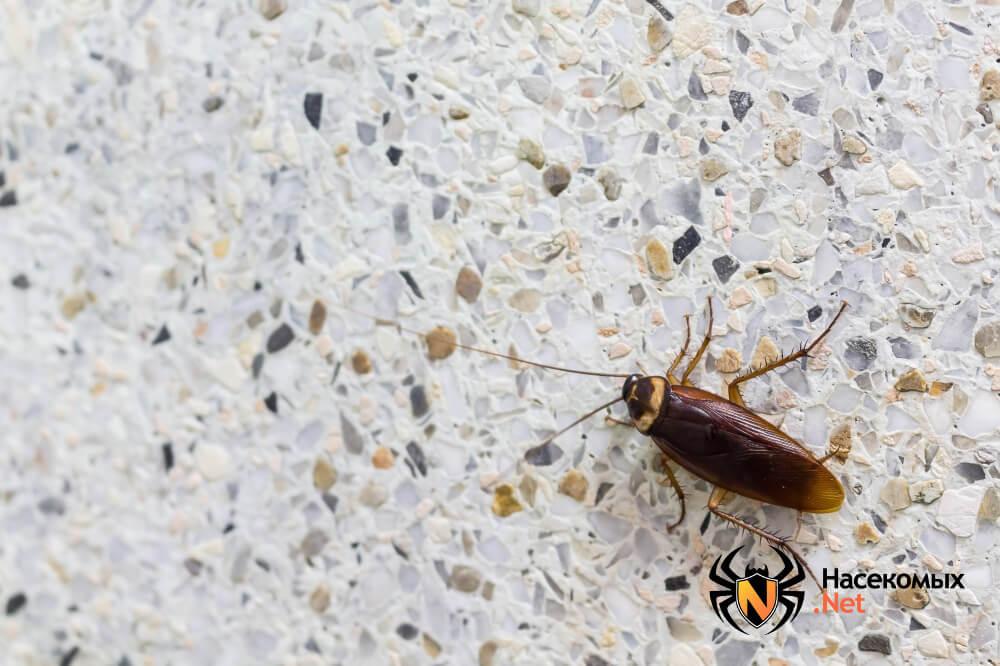 Уничтожение тараканов народными методами фото