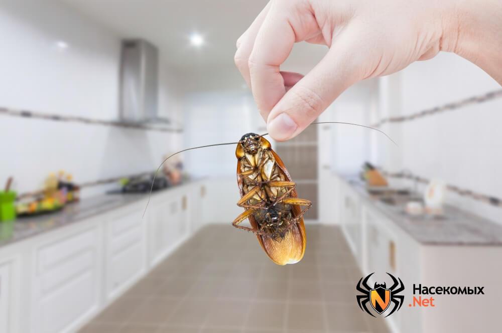 Уничтожение тараканов народными методами